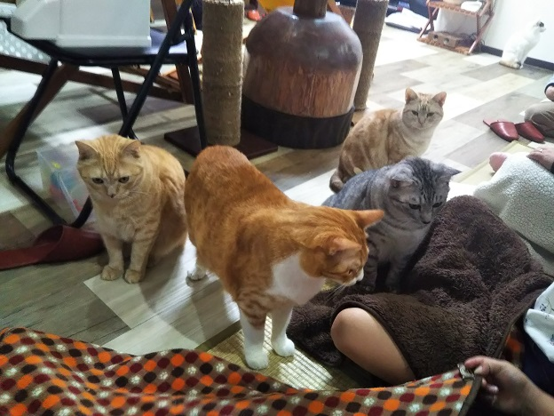 肉球の猫cafe