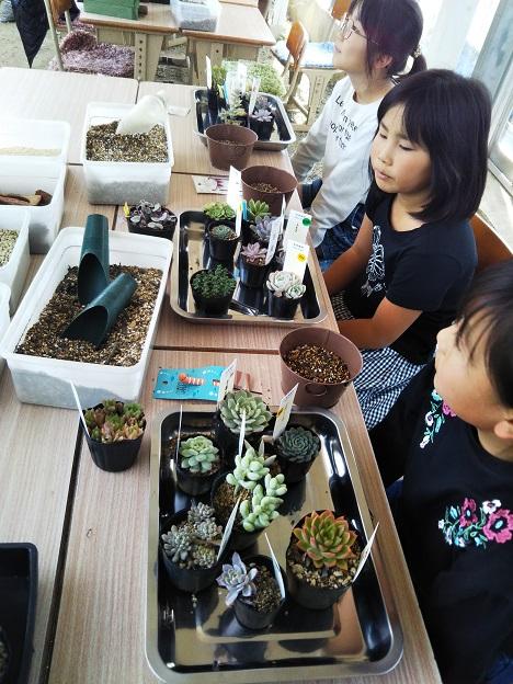 Saiki Engeiで多肉植物の鉢植え体験