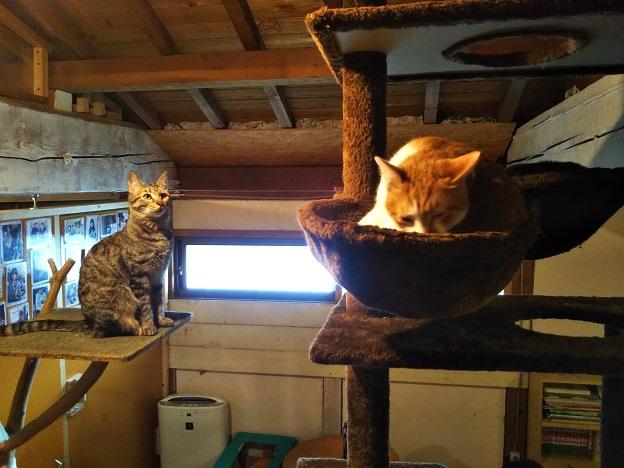 保護猫シェルターにゃんさとの猫